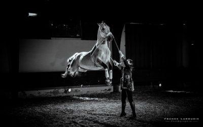 Thillombois – Spectacle Le cheval, roi du château Les 22, 23 et 24 septembre 2017.