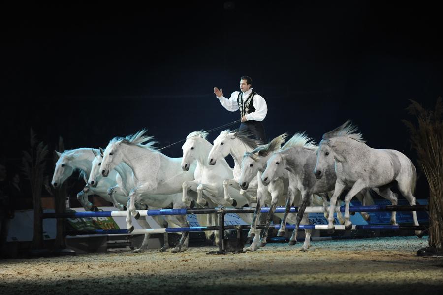 Le château de Thillombois accueille en septembre Lorenzo et ses chevaux en liberté