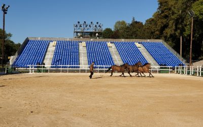 Christophe Hasta Luego proposera différents numéros avec ses chevaux.