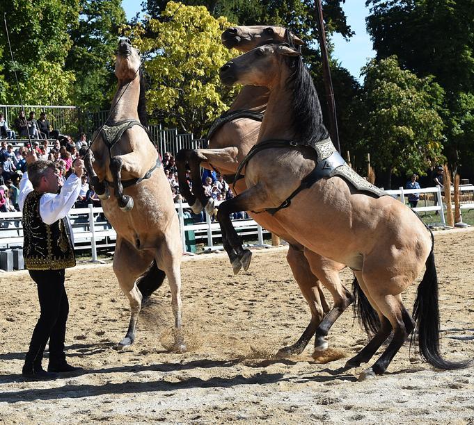 Les arts équestres inspirent plus de 3 000 scolaires
